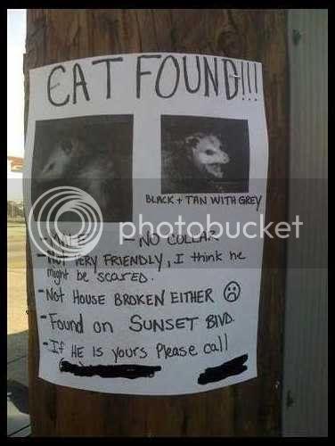 cat_found.jpg