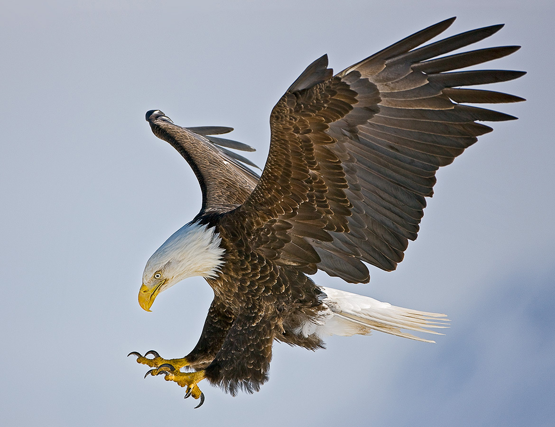 "F-22A Mercenary Raptor in ""Eagle Raptor"" Camo"