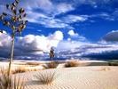 Desert Bliss.jpg