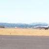 Hornet on the Runway