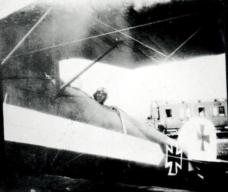 Kempf's Albatross