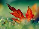 nature_035_1600x.jpg