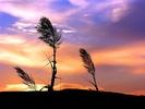 nature_002_1600x.jpg
