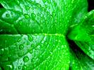 ___verde____by_ravelithium.jpg