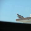Florida Trip 2010 060.jpg