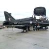 Hawk_t2.JPG