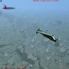 bob 2010-09-13 20-25-18-59.jpg