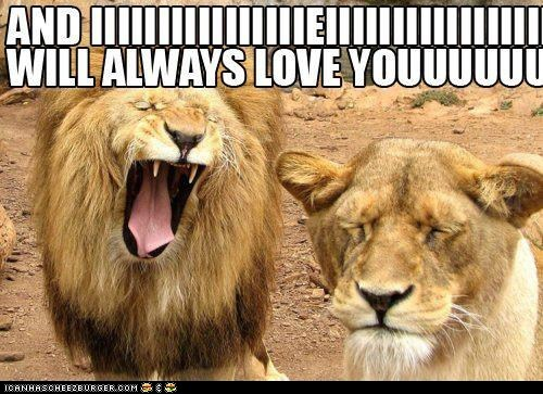 funny-pictures-i-will-always-love-you-lions.jpg
